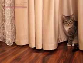 Милый котик и наши шторы в спальне.